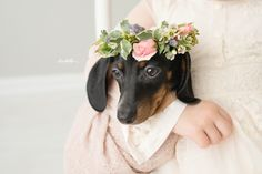 A girl hugs her puppy | Lentille Photography | Darling Dachshund