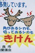 Warning Cuteness Ahead - Japan Talk
