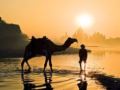Are you feeling the same after looking at this picture? Wanting to be dromedary rider? #TajMahal