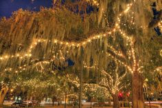 Downtown Tallahassee - Christmas Oaks