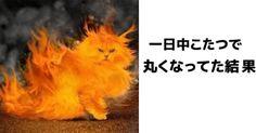 笑いと癒しの猫のボケてをご紹介!日々の疲れを吹き飛ばします。