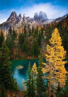 Mountain Larches at Blue Lake - Tamarac, Washington