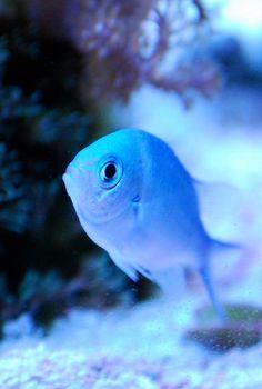 Blue Fish   #ICantFindMyCzechbook #OPIEuroCentrale