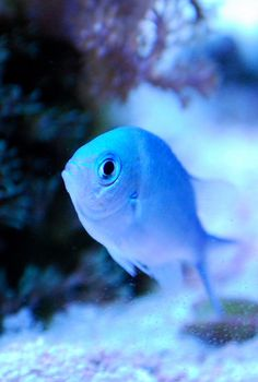 Blue Fish Colorful Tropical Love Dream Color