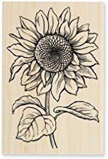 Shop for Stampendous Jumbo Cling Rubber Stamp-Sunflower. Get free delivery On EVERYTHING* Overstock - Your Online Scrapbooking Shop! Sunflower Sketches, Sunflower Drawing, Sunflower Art, Wood Burning Patterns, Wood Burning Art, Easy Drawings, Wood Art, Art Sketches, Painting & Drawing