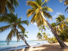The ultimate tropical getaway. Calm and clear waters with palm trees lining the shore. Vendors walk up and down the beach selling local delicacies— the coconut ice cream is a must-try. Get there: Flights arrive in Fort-de-France at the Martinique Aimé Césaire International Airport (FDF). From there, it's an hour-long drive to the very southern tip of the island. The Instagram moment: The pristine white sand at Les Salines stretches on for miles, giving you plenty of angles to capture an…