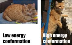 organic chemistry explained w/ cats :)
