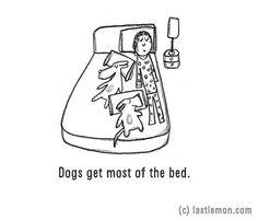 Egy ágyban alszol a kutyáddal?