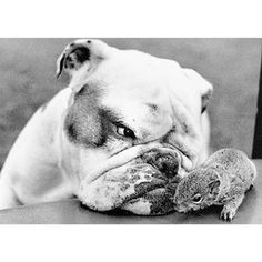 Bulldog Nuzzling Squirrel Blank Card by Graphique de France. $2.95