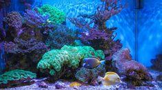 В гостях у сказки №1. Морской аквариум с внешней шахтой