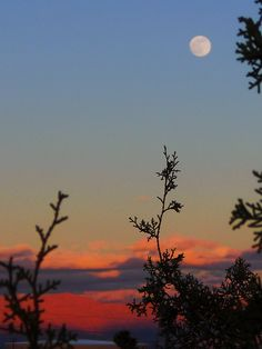 """""""Blue Moon"""" over Mojave Desert, photo by Neodly"""