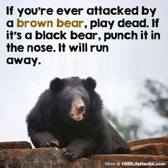 I once saw a thing to remember this: If it's brown, lay down, if it's black, fight back, if it's white, goodnight. Lol