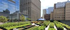Milk-crate farming in the city © Riverpark Farm