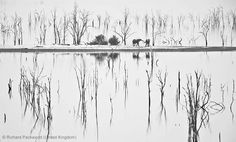 Wildlife- Photographer of the Year by Richard Packwood
