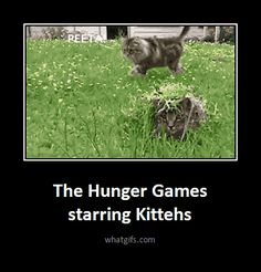 Funny Hunger Games | The Hunger Games « Best Funny Animated Gifs Updated Every Day ...