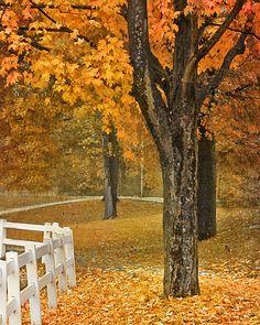 fall day...