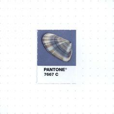 pantone-petit-objet-couleur-03