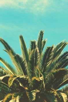 Palm tree summer summer of love, summer vibes, tropical vibes, tropi Tumblr Ocean, Palmiers, Poster S, Tropical Vibes, Summer Of Love, Summer 3, Insta Photo, Happy Sunday, Palm Sunday