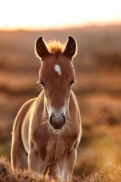 foal love!!