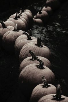This is the Fall Spirit - Geliebter Herbst - Halloween