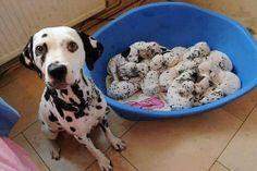 Dem-doggone-dogs-36