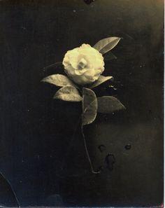 ARTIST:  Masao YamamotoTITLE:  #40DATE:  not listedMEDIUM:  gelatin silver printSIZE:  h: 4.8 x w: 3.9 inEDITION:  20