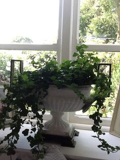 Ivy Miss And Ms, Ivy House, Garden Plants, Ivory, Indoor, Space, Green, Decor, Interior