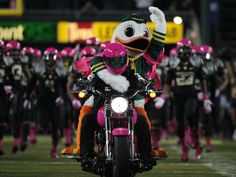The Oregon Ducks' mascot rides onto the field on the back of a motorcycle against the Washington State Cougars at Autzen Stadium.