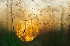 Small Wonder Of Late Summer | Sandra Bartocha