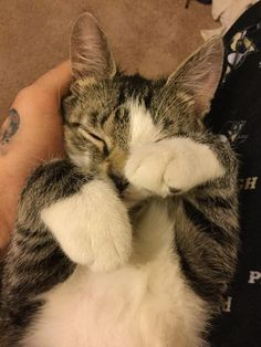 Today I lost my left hand. It is now a pillow.   http://ift.tt/1UXsGIw via /r/cats http://ift.tt/1q7v41P  cats funny pictures