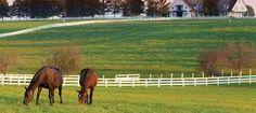 big grassy paddocks for the horses
