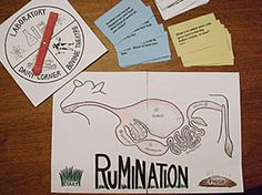 The Rumination Game: Great cards and board. I'm going to change the cards to match my unit a little better. Great review tool!
