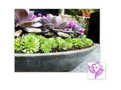 Succulent in the Container Garden #NWFGS 2012