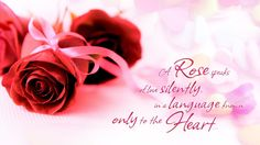 Red Rose Love Words Quotes Wallpaper HD Free Download