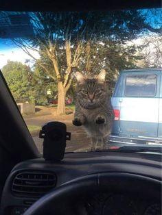 「遅刻しそうになって、猫にエサをあげるのを忘れた日の朝」01