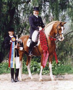 Arabian Sport Horse :: CAL DORADO (Cal-O-Bask x Bint Se Deyra) was owned by Barbara Parkening. He was 1997 National Champion Prix St Georges with Hilda Gurney.