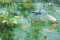 It is real pond, such as like the Claud Monet paintings in Seki, Gifu pref. Not a painting. Goldfish Pond, Art Chinois, Painter Artist, Fish Ponds, Lily Pond, Green Landscape, Monet Paintings, Water Lilies, Landscape Photos