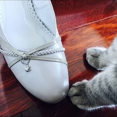 """Like new! Kitten Heels in Sheer Gray Beige A beautiful and classic lady's kitten heels :) 1.5"""" heels with cute decorative front! Hehe Momo came to investigate these """"kitten"""" heels Shoes Heels"""