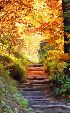 """Stairway to Heaven""...fall on the Appalachian Trail...photo by Ginger L Dunn Photography"