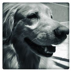 Leica in Black and White
