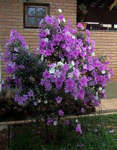 60 Beautiful Small Flowering Trees Front Yards Design IDeas - Page 49 of 60 Small Vegetable Gardens, Vegetable Garden For Beginners, Gardening For Beginners, Landscaping Trees, Small Backyard Landscaping, Zen Garden Design, Landscape Design, Trees And Shrubs, Flowering Trees
