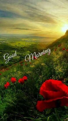 Good Morning Friends Quotes, Good Morning My Friend, Good Morning Beautiful Images, Morning Greetings Quotes, Good Morning Picture, Good Morning Flowers, Good Morning Good Night, Morning Pictures, Good Morning Wishes