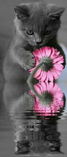 Pink flower with cute kitten.You Sweet My Beautiful Kitten....<3