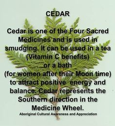 Cedar is One of the Four Sacred Medicines and is Used in Smudging. It Can be Used in a Tea (Vitamin C benefits) .or a Bath (for Women at Moon Time) to Attract Positive Energy and Balance. Cedar Represents the Southern Direction in the Medicine Wheel.