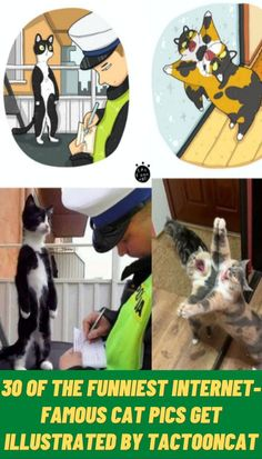 #Funniest #Internet #Famous #Cat #Pics #Illustrated #Tactooncat Funny Videos For Kids, Funny Animal Videos, Funny Animals, Funny Cute, Really Funny, Hilarious, Funny Pigs, Fun Diy Crafts, Rock Crafts