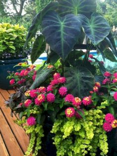 My Favorite Plant Combinations 55