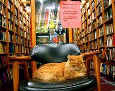 """Résultat de recherche d'images pour """"cats + books"""""""