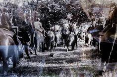 Águas de Pontal: Gangala na Bodio e a domesticação de elefantes afr...
