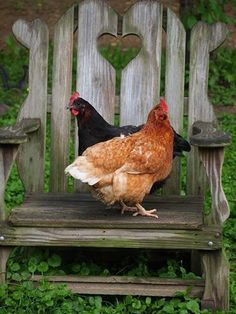 two hens, weathered wooden chair, country life Country Farm, Country Life, Country Living, Country Girls, Hen Chicken, Chicken Coops, Country Chicken, Chickens And Roosters, Hens And Chicks