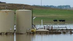 Livestock Falling Ill In Fracking Regions - Are dying cattle the canaries in the coal mine? Farmers and ranchers are sounding alarms about the risks to human health of hydraulic fracturing.